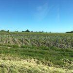 vignobles Chȃteau Gruaud Larose